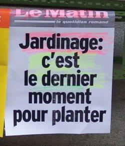Giardinaggio: è l'ultimo momento per piantare